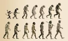 20140308071807-08.evolucion.jpg